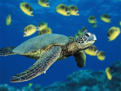 Apertura straordinaria acquario